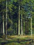 Еловый лес - 1891 год