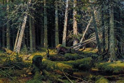 Бурелом 1888