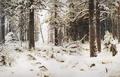 Зима - 1890 год