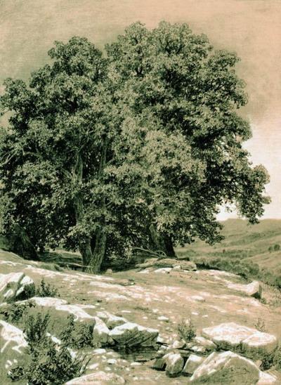 Крымские орешины 1884