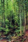 Лес-осинник - 1896 год