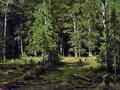 Лес - 1880 год